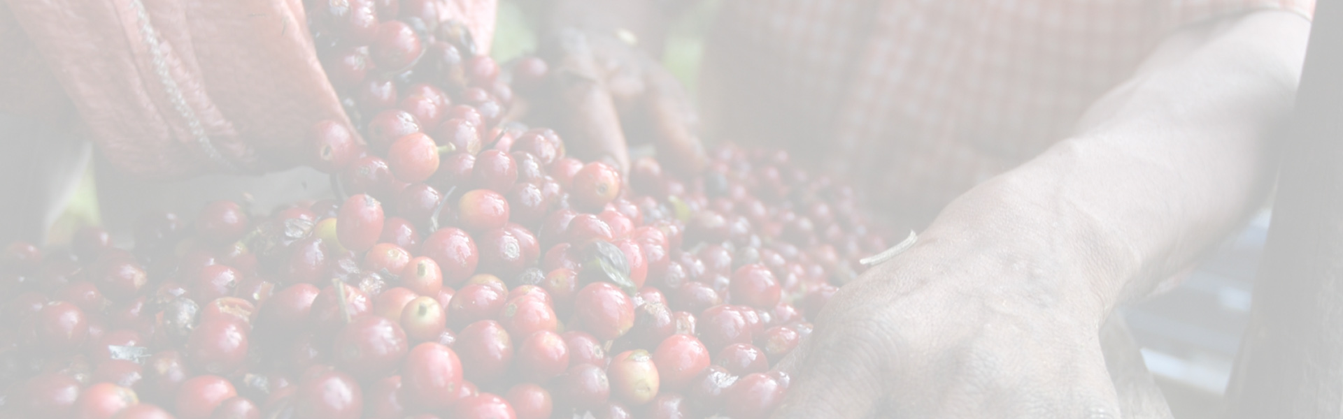 KÁVA CARRARO - Zpracování kávy